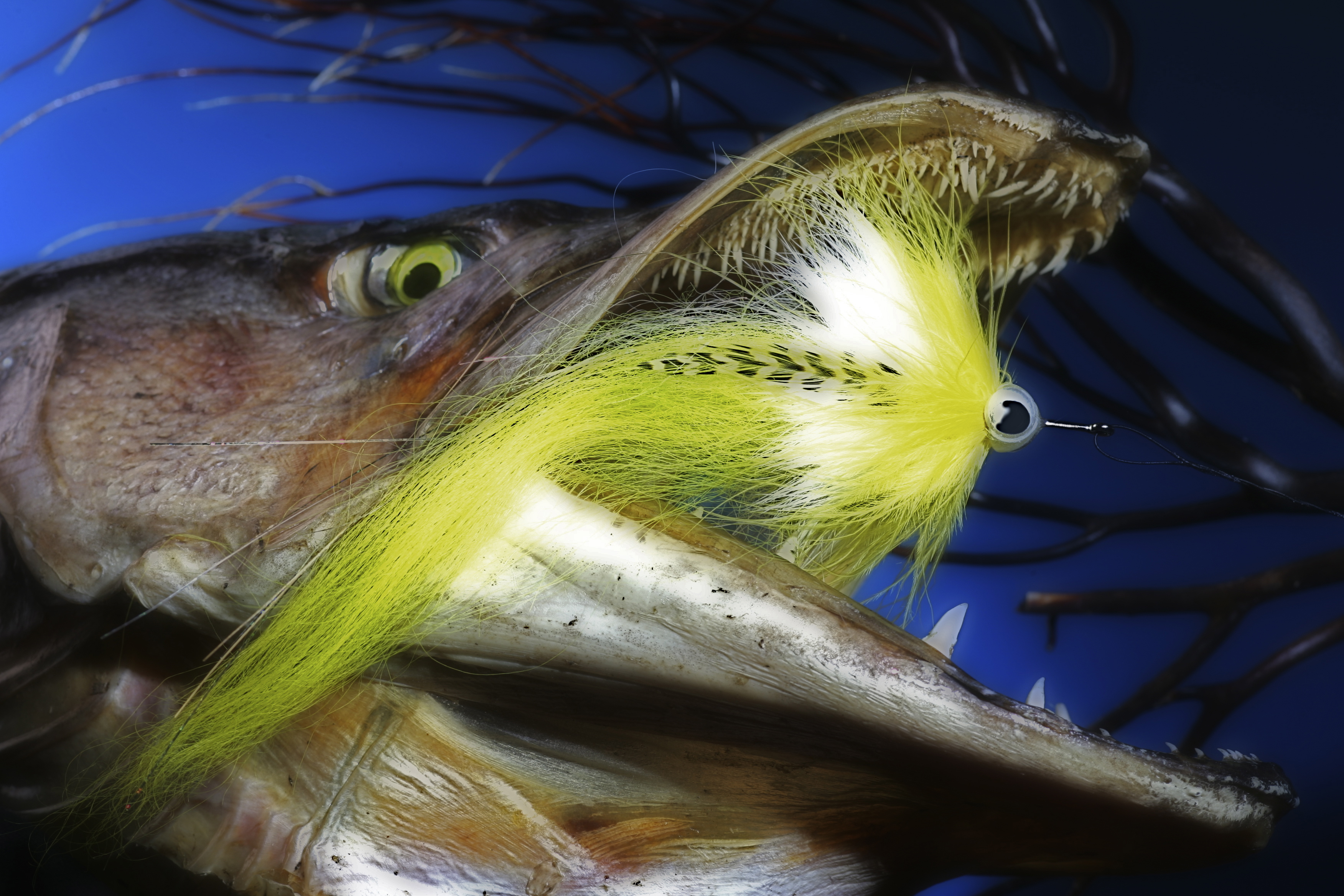 Pike flies thefeatherbender for Fly fishing flys