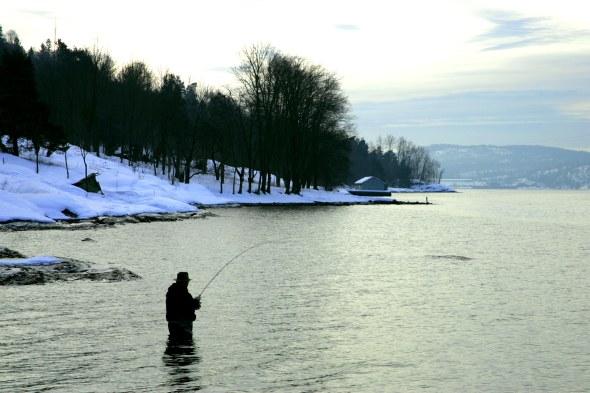 winter sea trout